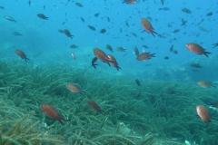 moenchsfische